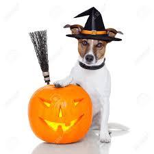 best halloween whatsapp dp status jokes and messages to enjoy