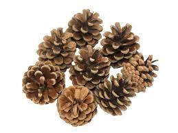 natural craft supplies art u0026 craft factory raffia pine cones