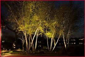 Outdoor Up Lighting For Trees Outdoor Up Lighting For Trees Lovely Uplights On A Grove Of