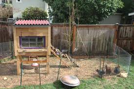 how to build chicken farm house with raising backyard chickens for
