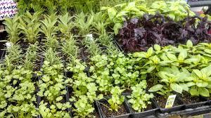late winter u2013 early spring ochoa produce