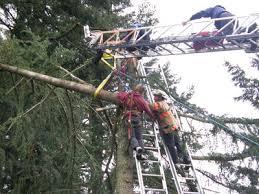blog page 2 of 12 austin tree service inc