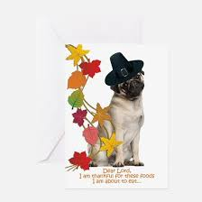 pug thanksgiving greeting cards cafepress