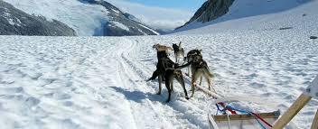 alaska icefield expeditions summer dog sledding and glacier