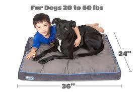 Medium Sized Dog Beds Best Dog Bed