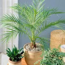 fast growing trees buy trees 1 888 504 2001