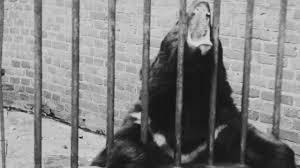 Zoo Resume De Brune Bjørne I Zoo Filmcentralen Streaming Af Danske