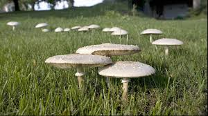 Mushroom Home Decor by Would You Eat These Mushrooms Southern Living