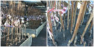 native plants for clay soil planting bare root trees in clay soil or u2026we now have an orchard