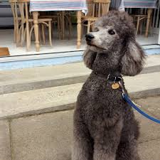 our doggy customer cliff top cafe overstrand