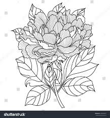 vector peony coloring book page adults stock vector 428689699