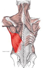 Lower Back Pain Bench Press Why The Lats Are So Important In The Bench Press All About
