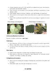 High Heat Plants Causes Of Plants Disease