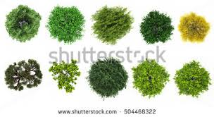 top view tree collection isolate on stock illustration 504468322