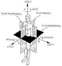 principaux plans et axes utilisés pour spécifier les directions de