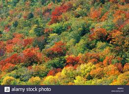 forest of trees with fall foliage on the skirts of mount