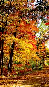 wallpaper 1080x1920 usa wisconsin wood autumn trees