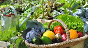 10 simple tips for a successful vegetable garden garden lovers club