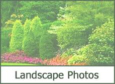 Evergreen Landscaping Ideas Types Of Evergreens For Landscaping Trees And Shrubs