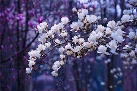 small fresh beautiful flower free photo on pixabay
