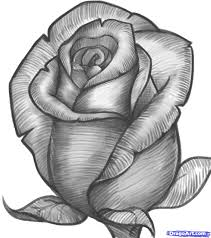 the 25 best rose drawings ideas on pinterest roses drawing