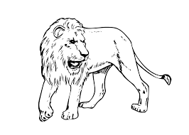 lion real animals coloring pages for kids printable free 1122