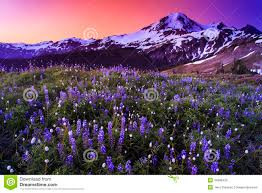 volcano flowers volcano and flowers in stunning color stock photo image 44985430
