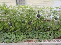 28 growing melons on a trellis 17 best images about square foot