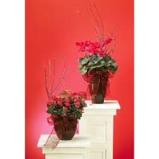 Ashland Flowers - sympathy and funeral flowers for the home cheatham county florist