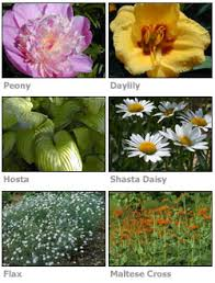 Perennial Garden Design Ideas Introduction To Perennial Garden Design Stepping Stones To