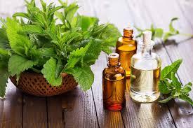 Evening Primrose Oil For Hair Loss Essential Oils For Hair Growth Get Longer Stronger Hair