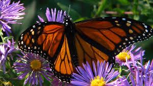 bird and butterfly sanctuary certification illinois audubon society