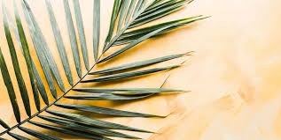 palms for palm sunday purchase 12 palm sunday scripture verses easter quotes from the bible