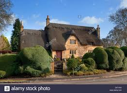 English Box Topiary - pretty thatched english cottage with topiary box hedging stock