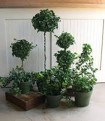 Topiaries Plants - 121 best topiary images on pinterest topiaries garden and