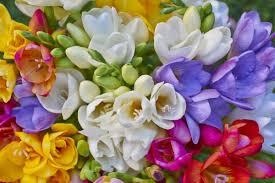 common wedding flowers 11 common wedding flower mistakes to avoid weddingbee