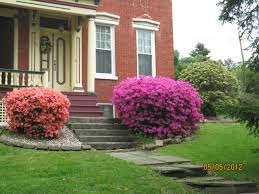 bushes in front of house garden ideas