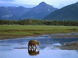 Alaska travel blogs images Visiting alaska a place of wonderful wilderness travel blog jpg
