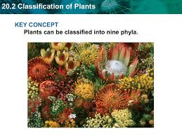 20 2 classification of plants
