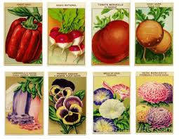 seed packets vintage seed packet prints and ways to craft with them