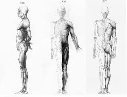 Female Anatomy Figure Anatomy Resources For Blenderheads Bensimonds Com Omegajack