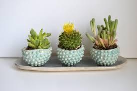 Succulent Planter Diy by Excellent Stone Succulent Planter Home Decorating Ideas