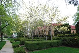 tree ideas for backyard awesome trees for small backyards pics ideas amys office