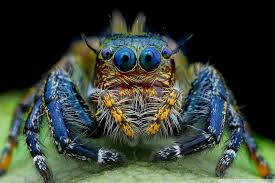 online buy wholesale jumping spider from china jumping spider