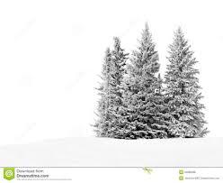 snowy trees royalty free stock photos image 34888388