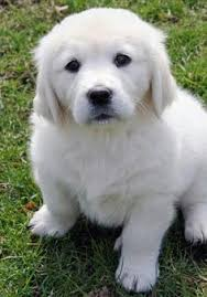 i swear these dogs are the one of most beautiful creatures on