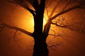 Gold Lights Abstract Black Branch Bright Dark Mist Gold Lights Nature