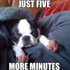 French Bulldog Meme - best frenchie french bulldog jokes pug jokes
