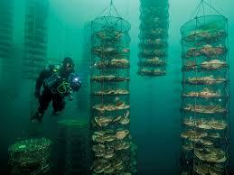 aquaculture national geographic