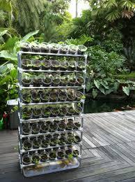 how to grow a vegetable garden from kitchen scraps seg2011 com